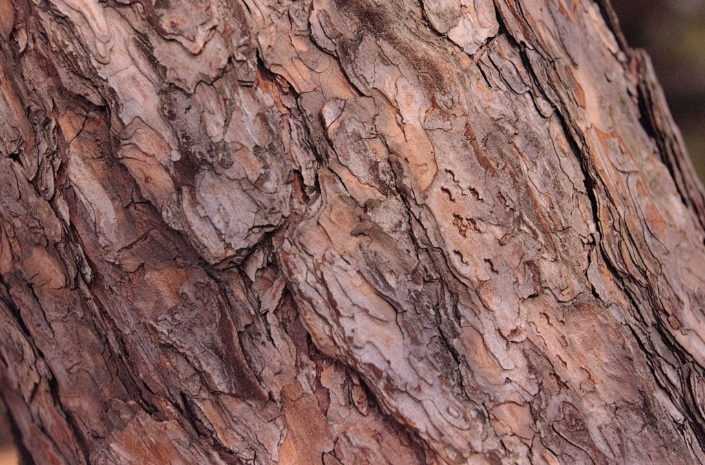 red gum bark, tree removal services