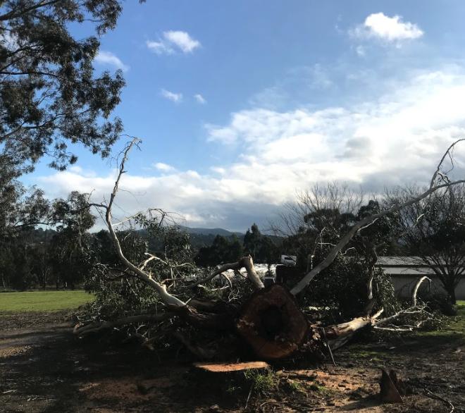 tree pruning services, tree maintenance