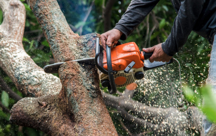 chainsaw tree trimming