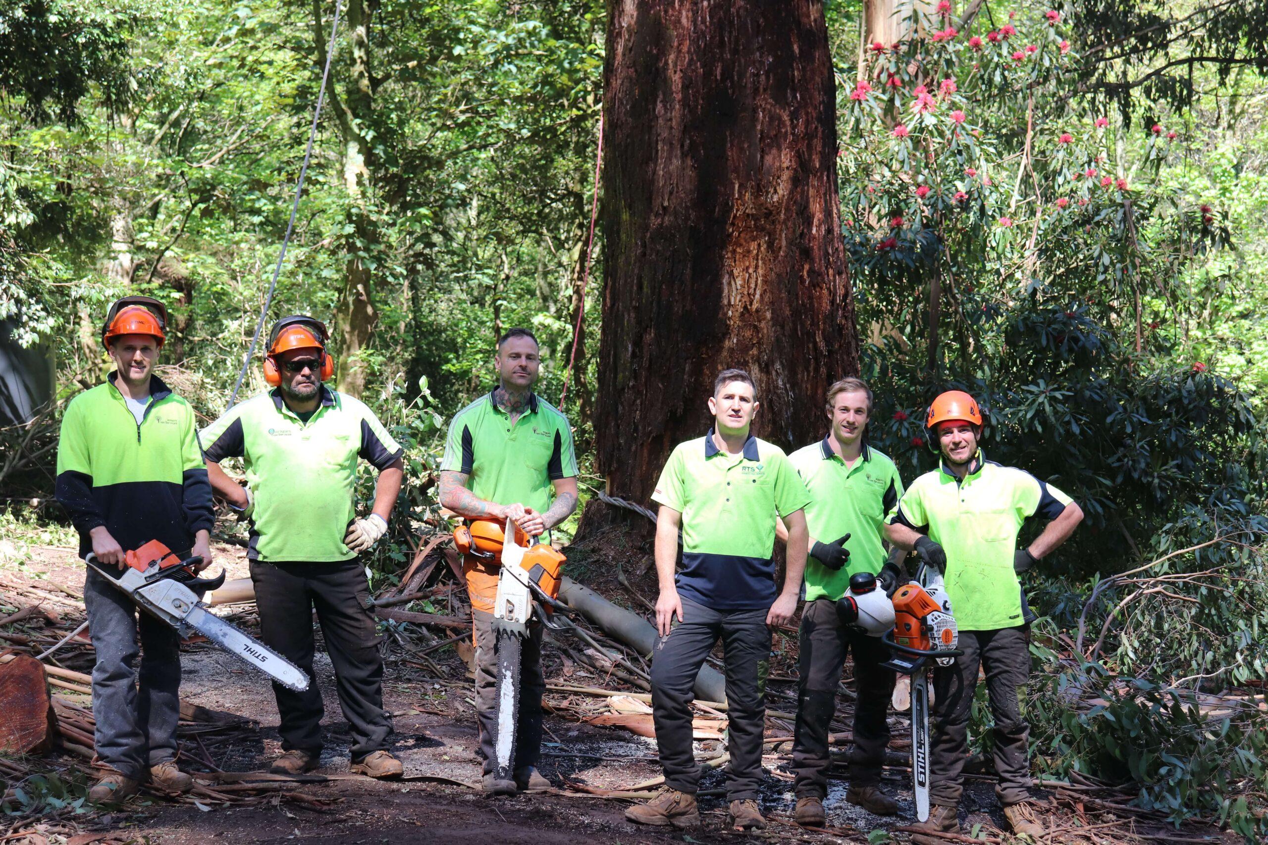 Reiners Tree Services Team